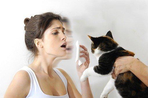 аллергическая реакция на кошку