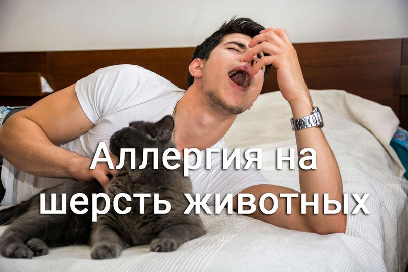 мужчина чихает держа кошку