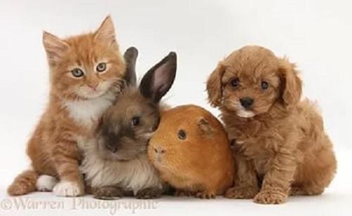 кошка, заяц и собака