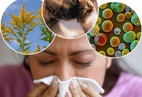 происхождение аллергенов