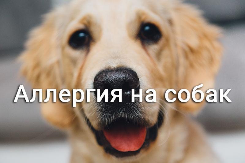собака радуется
