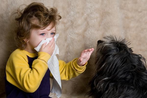 ребенок чихает из-за собаки