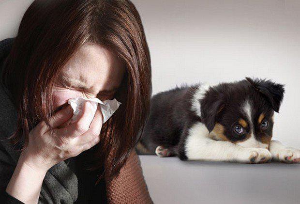 девушка чихает из-за собаки