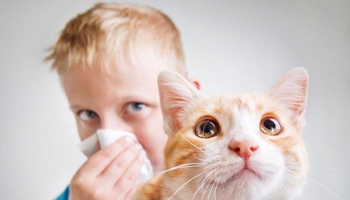 у мальчика аллергия на кошку