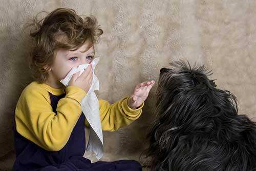 ребенок кашляет от собаки