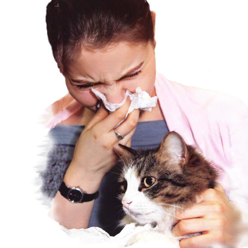 девушка чихает из-за кошки
