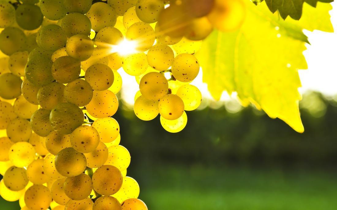 Жёлтый виноград