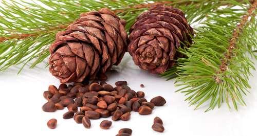 Кедровые орехи и ветки кедра